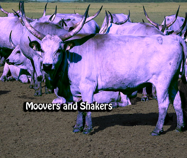 Moovers and Shakers