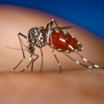 Stupid Mosquito
